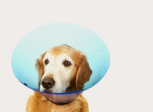 Quick Guide to On-Line Pet Insurance for Your Dog